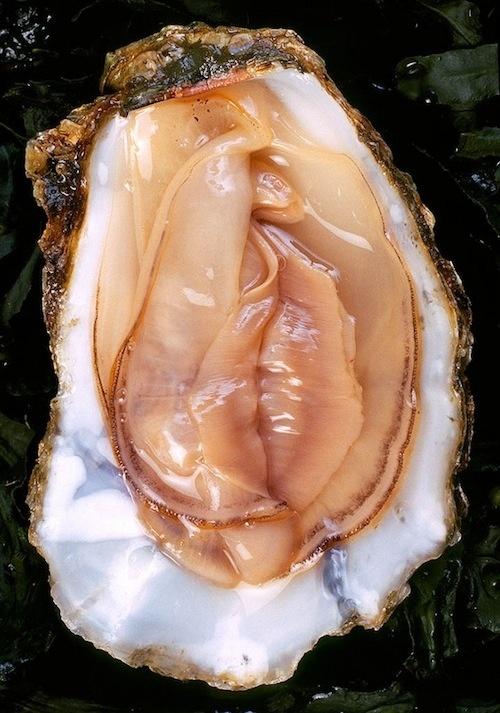 oystervagina.jpg