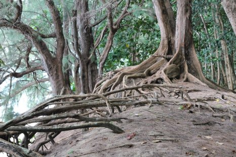 """Image result for roots 2 trees"""""""