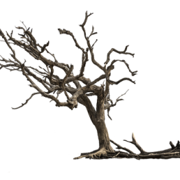 tree-3417631__340.png?format=1500w