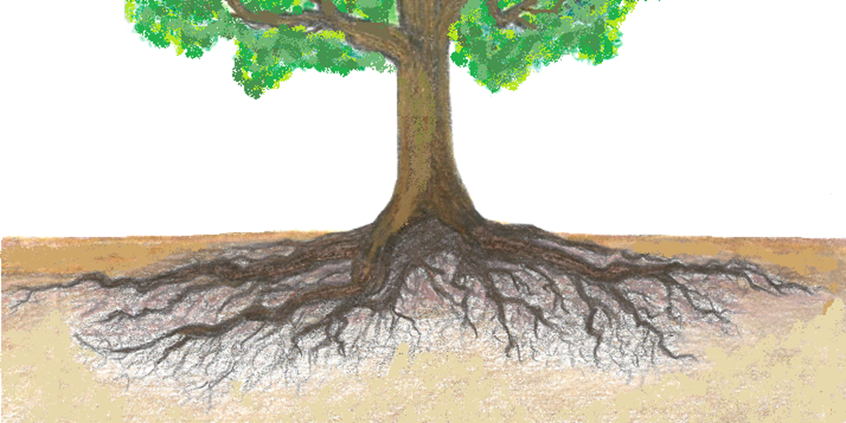 final-tree-for-soil-water