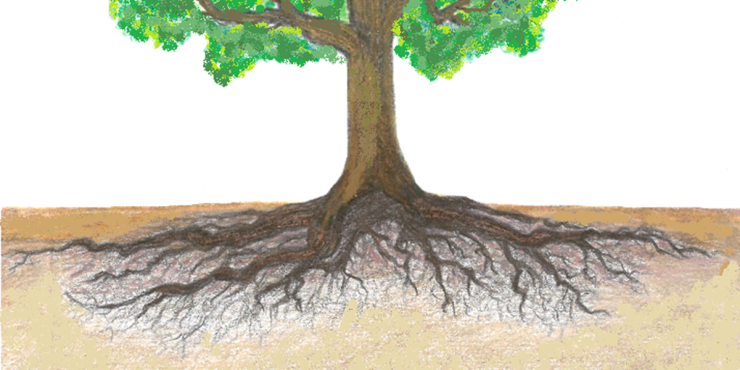 final-tree-for-soil-water