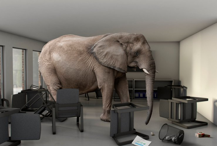 Embracing the Elephant in the Room — Horizon Leadership