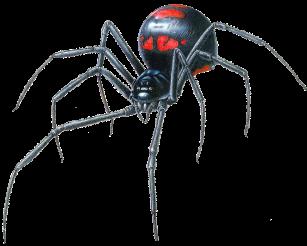 Black-Widow-Spider-Transparent-PNG