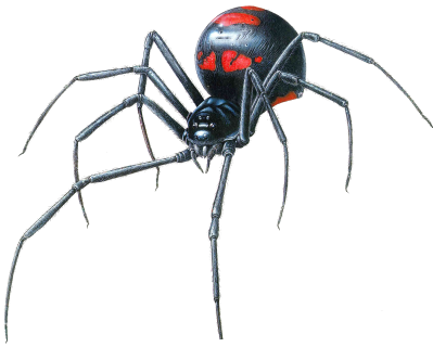 Black-Widow-Spider-Transparent-PNG